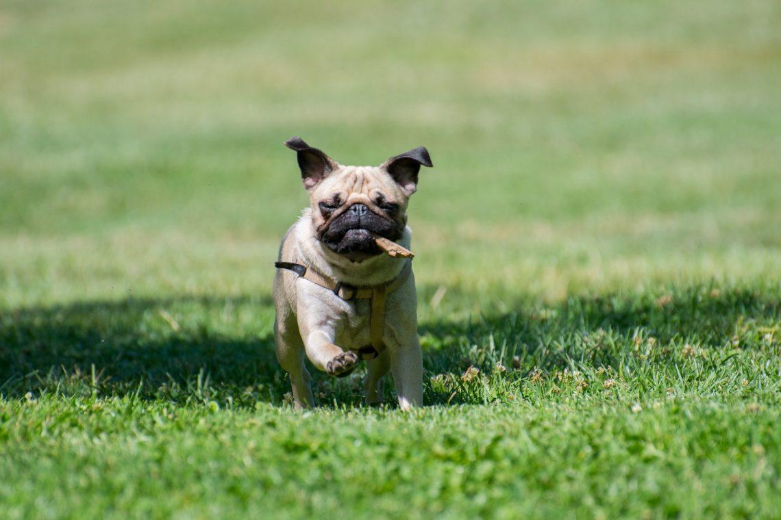 Livraison de croquette pour chien à domicile